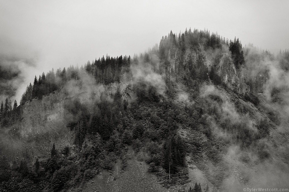 Stevens Canyon Fog, Mount Rainier National Park