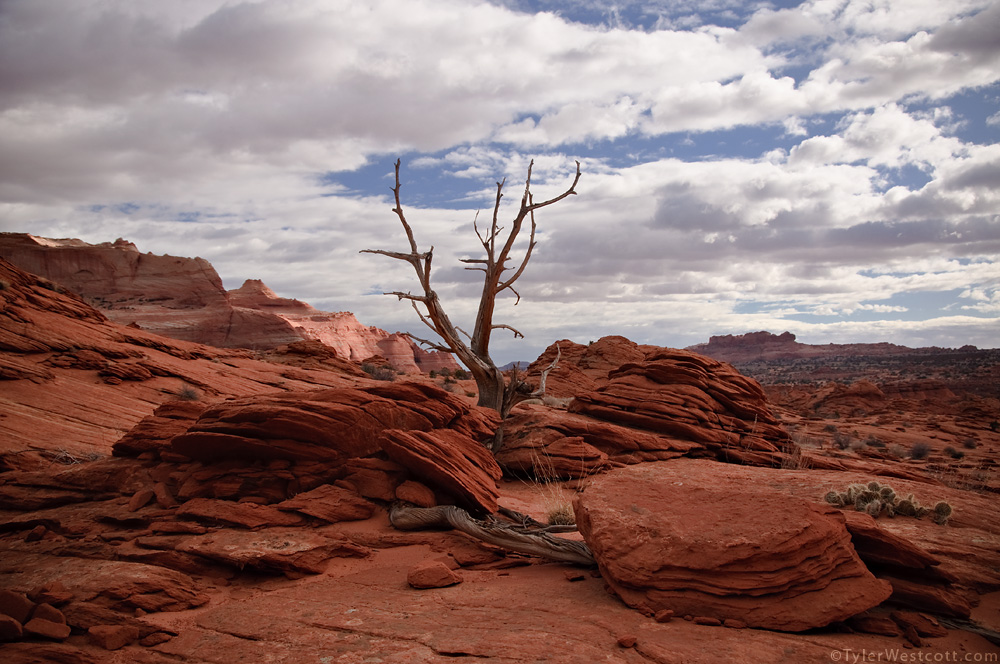 Lone Tree, Coyote Buttes North, Utah (Color)