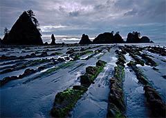 Point of the Arches, Shi-Shi Beach, Olympic National Park, Washington