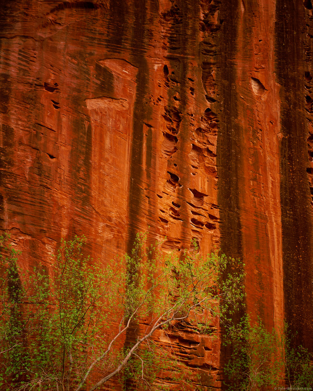 Eroded Wall, Taylor Creek Canyon, Zion National Park