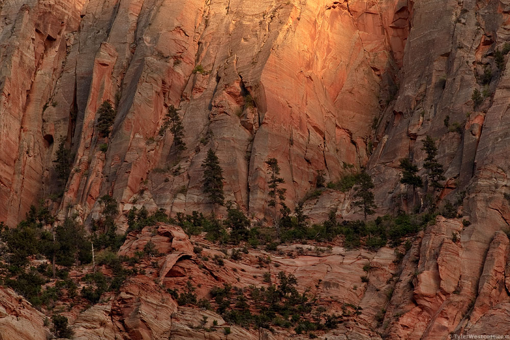 Bridge Mountain Detail, Sunset, Zion National Park