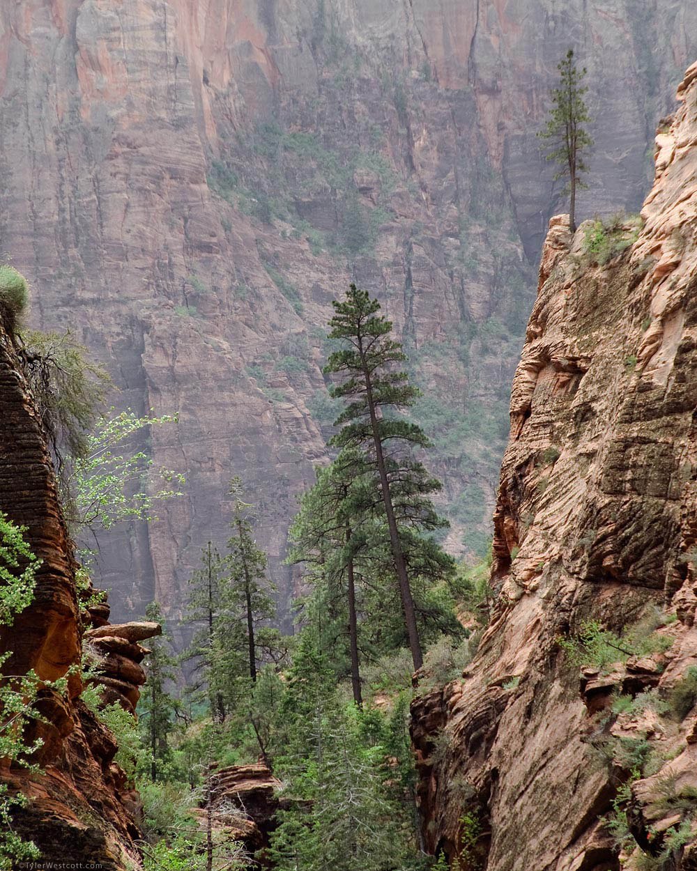 Places To Live Near Zion National Park: Pines, West Rim Trail, Zion National Park
